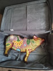 Pig in a suitcase